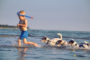 Child playing with dogs in the water