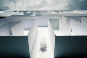 mouse running inside a maze